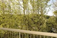 Vista della pineta