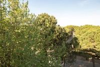 Vista sulla pineta