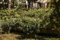Orto coltivazioni