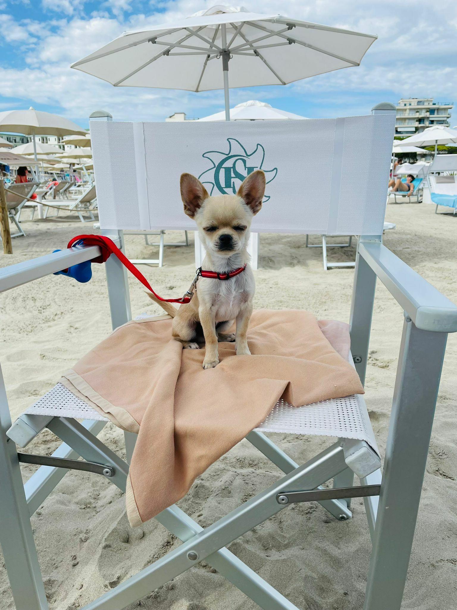 bagno giuliano 247 milano marittima spiaggia distanziata amica degli animali