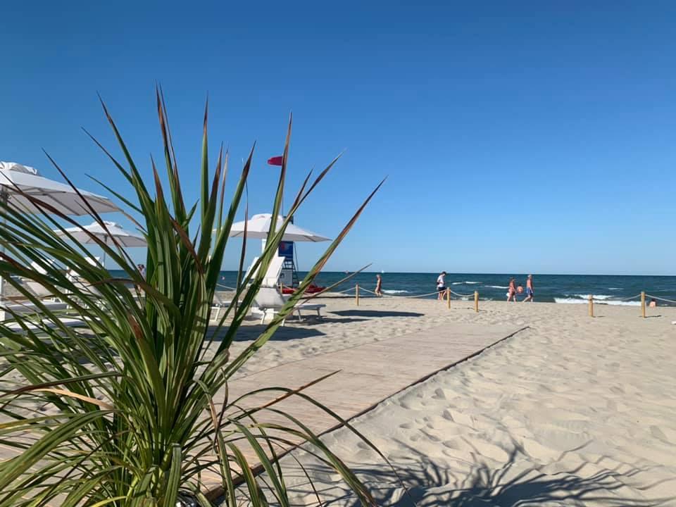 Palma e passerella bagno giuliano 247 lungomare milano marittima, animali ammessi, aperitivo sulla spiaggia